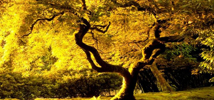 Ветер с золотыми нитями